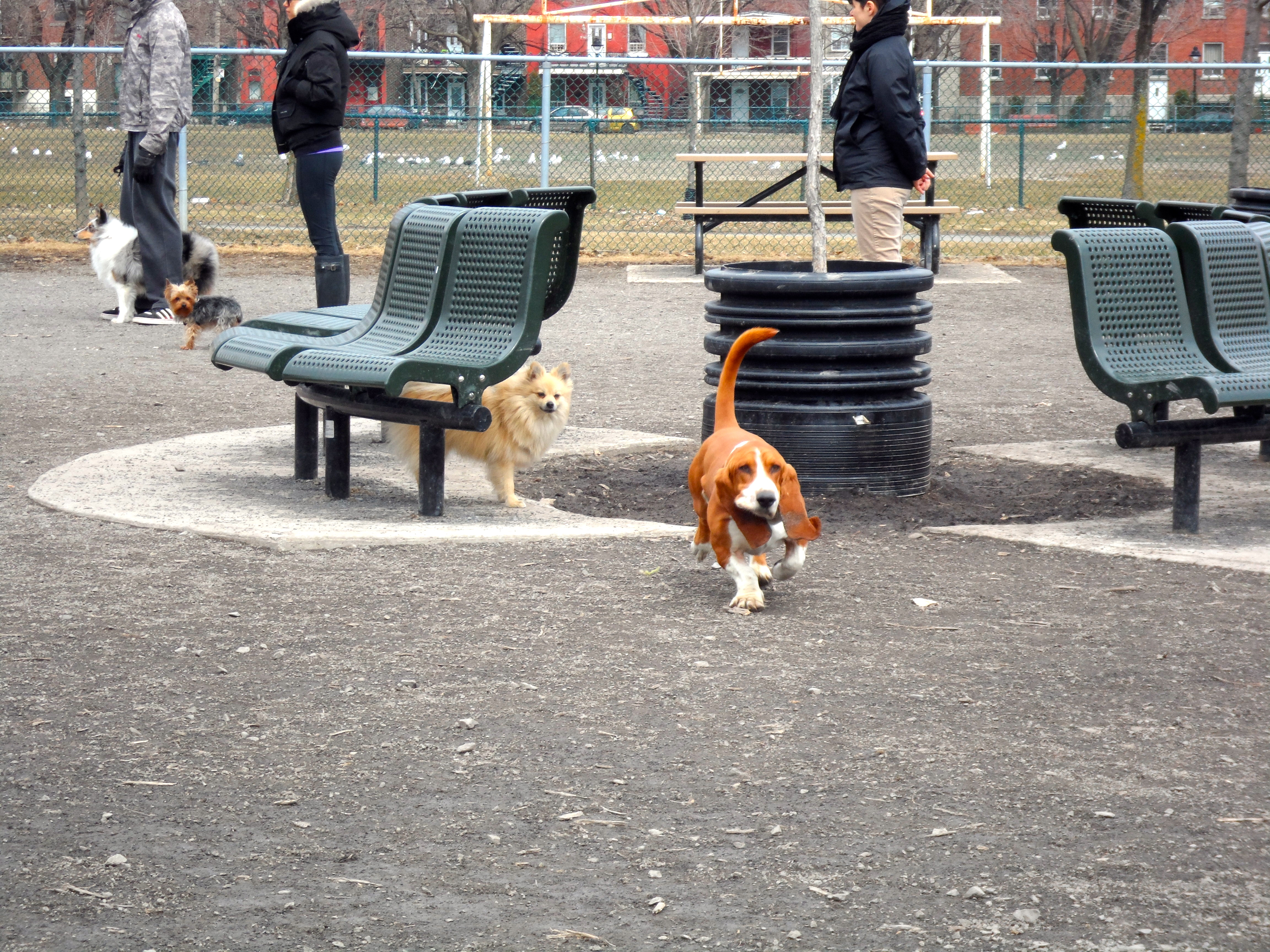Laurier Dog Park Montreal